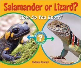 Salamander or Lizard?-0